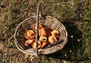 foraging mushroom basket