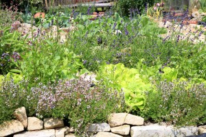 Organic cultivation of herbs and vegetables