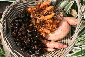 harvest basket water chestnuts